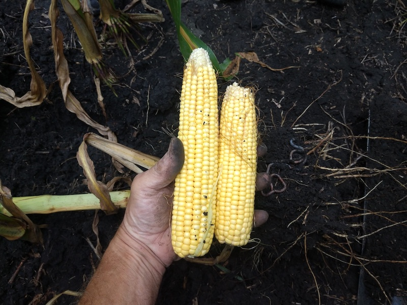 Micro-Energy Corn Side by Side