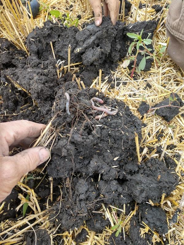 Micro-Energy Wheat Stubble
